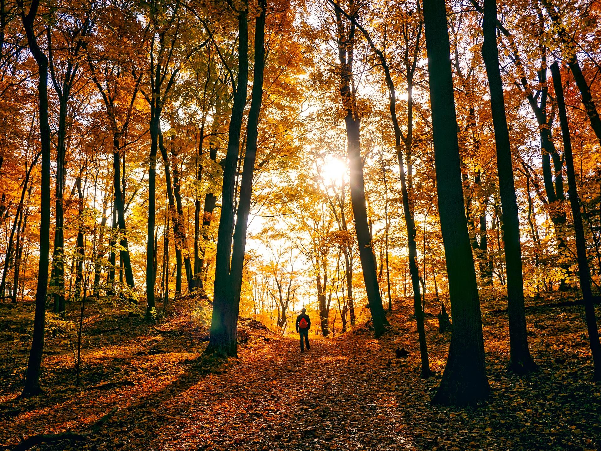 autumn-1812180_1920